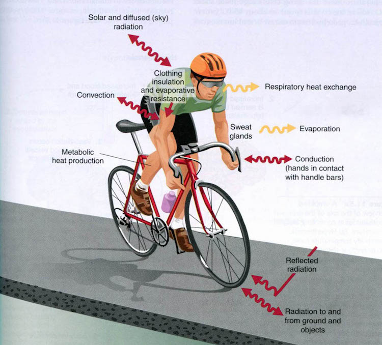 thermoregulation while cycling