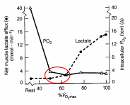 Lactate, PO2 and exercise